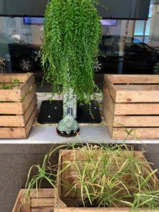 lille-bulles-a-flotter-plantes-dans-caisses-bois-vitrine