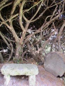 Intérieur if igloo -Jardin des ifs Gerberoy Oise