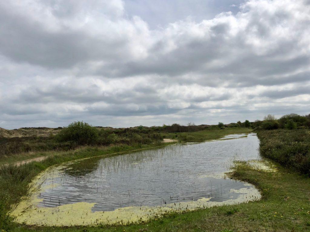 Etendue d'eau réserve naturelle Westhoek La Panne Belgique