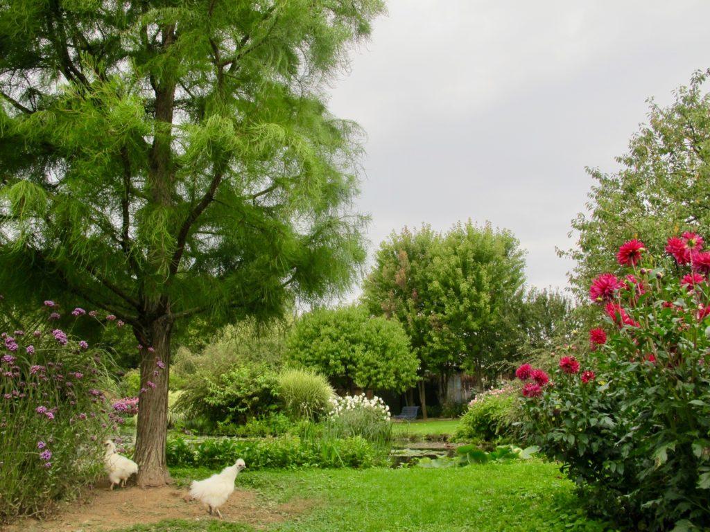 Jardin André van Beek Oise - poules et dahlias