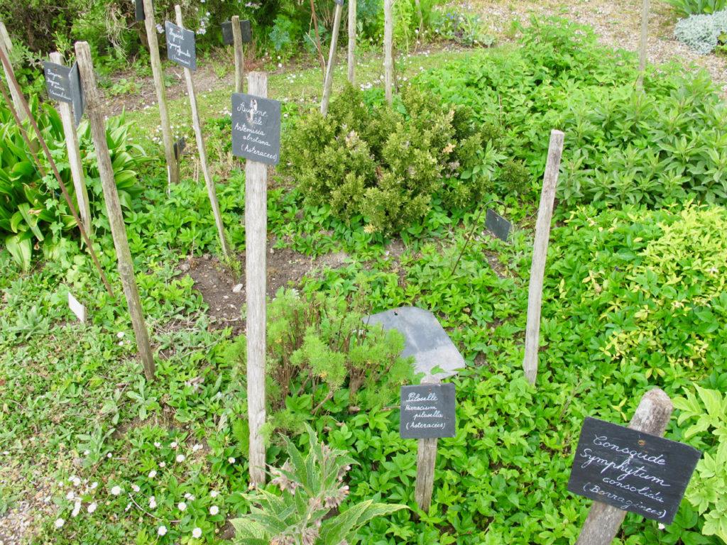 Plantes étiquetées - Herbarium Saint-Valery-sur-Somme