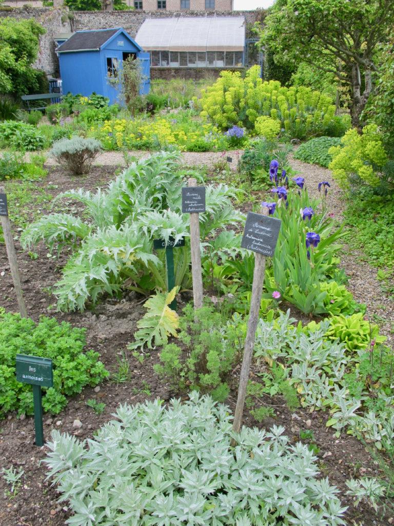 Plantes et cabane bleue au fond - Herbarium Saint-Valery-sur-Somme