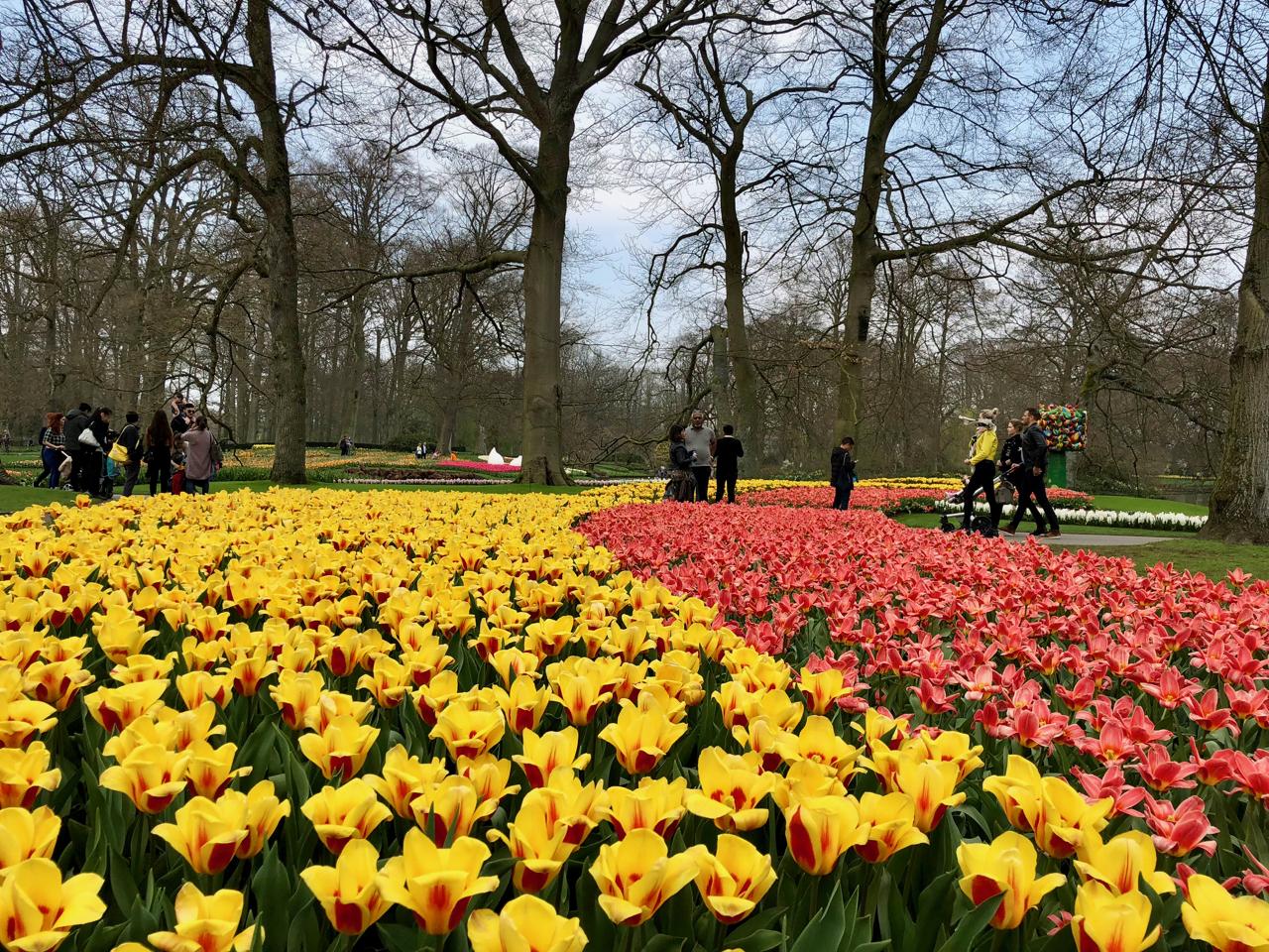 Idee De Plantation Pour Parterre balade printanière au parc floral du keukenhof aux pays-bas