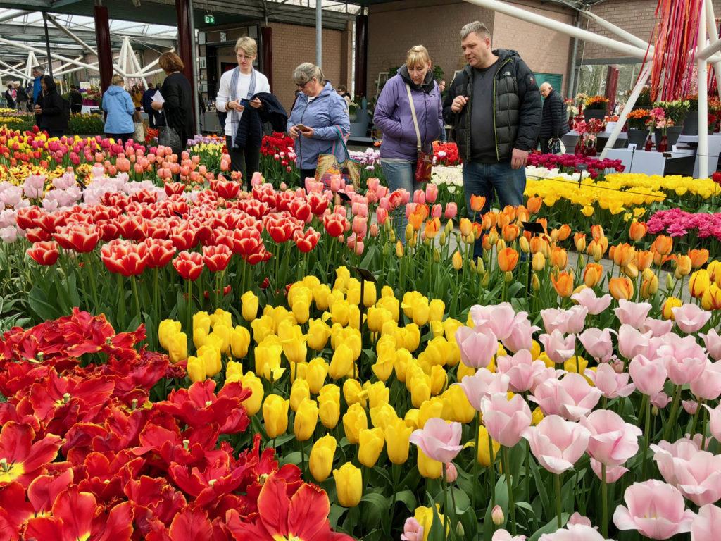 Tulipes multicolores sous serre - Keukenhof Pays-Bas