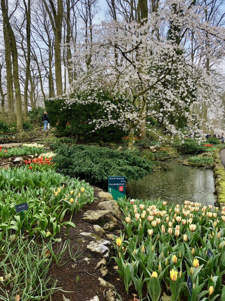 Sous-bois parc floral du Keukenhof Pays-Bas
