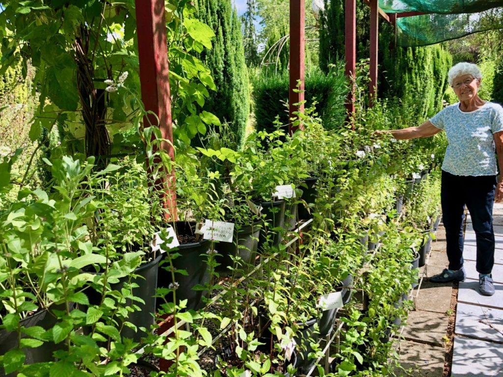 Jardins de Ly Sénarpont Somme - coin des menthes
