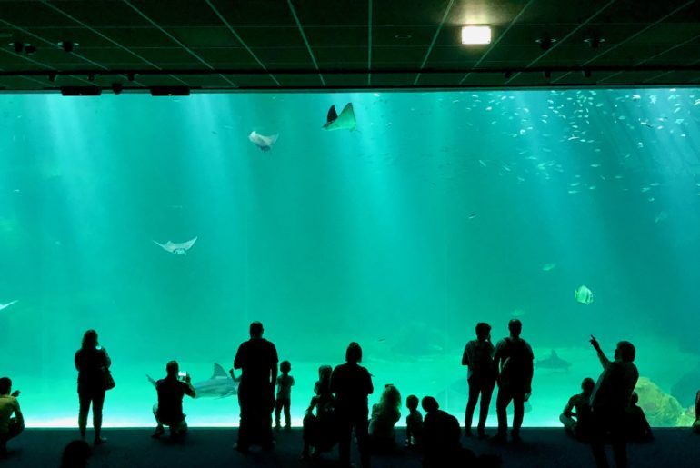 Nausicaa Boulogne-sur-Mer - grand bassin nouvelle extension
