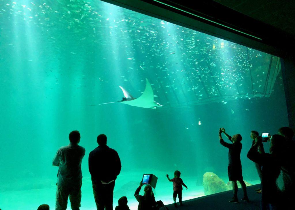 Nausicaà Boulogne-sur-Mer - Nouvelle extension grand bassin avec visiteurs devant vitre