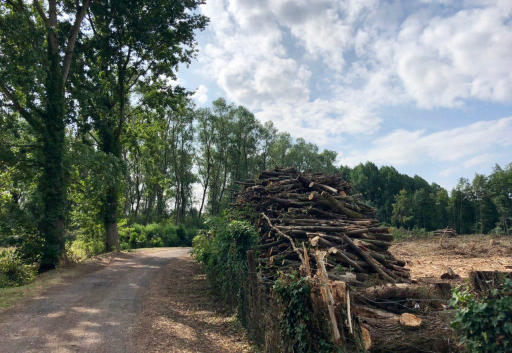 Rando Grand Marais bois coupé