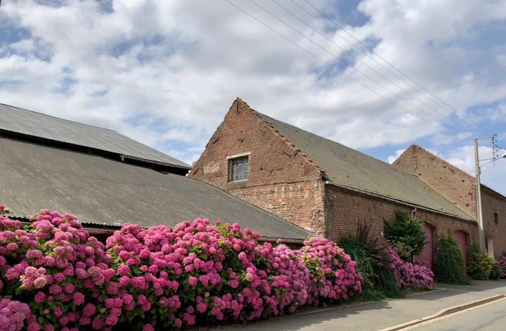 Rando Grand Marais ferme hortensias