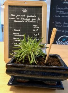Itsy Bitsy Lille - ardoise jus et plante verte