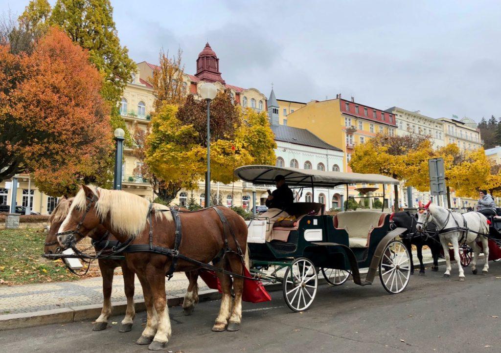 Marienbad-attelage-chevaux