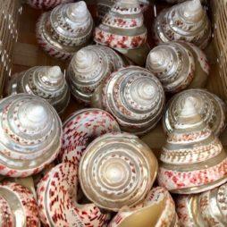 Musee-de-la-nacre-et-de-la-tabletterie-meru-coquillages-boutique