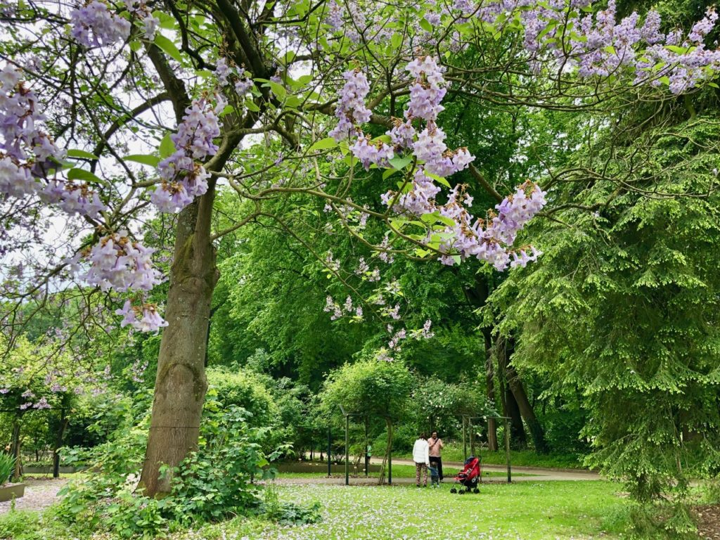 Jardin-botanique-Meise-arbre-en-fleurs