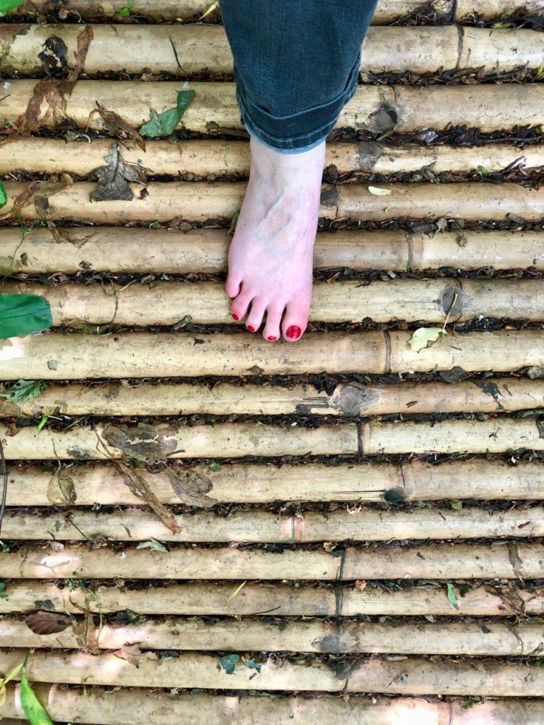 Jardin-botanique-Meise-bambous
