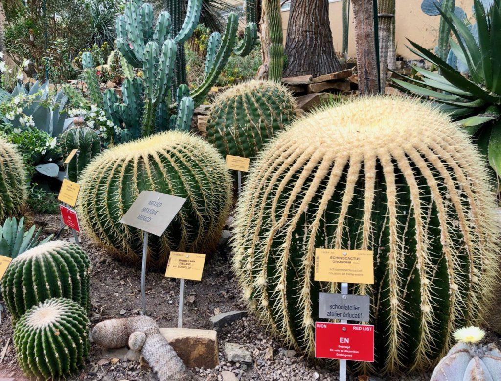 Jardin-botanique-Meise-palais-des-plantes-cactus