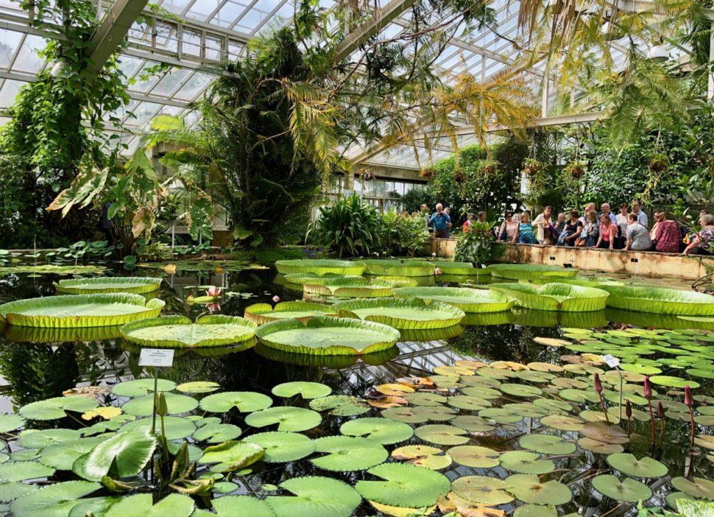 Jardin-botanique-Meise-palais-des-plantes-nenuphars-sur-bassin