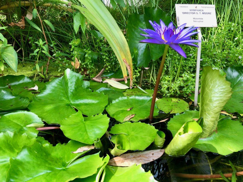 Jardin-botanique-Meise-palais-des-plantes-plantes-eau