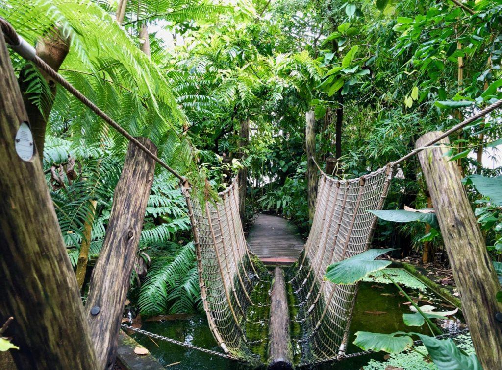 Jardin-botanique-Meise-palais-des-plantes-pont-de-singe