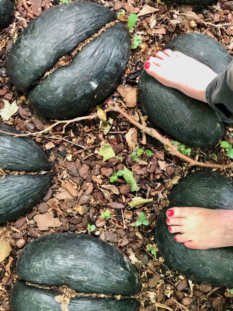 Jardin-botanique-Meise-parcours-surprenez-vos-pieds-noix-coco