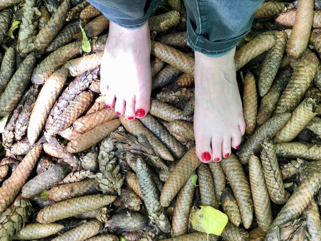 Jardin-botanique-Meise-parcours-surprenez-vos-pieds-pommes-de-pin