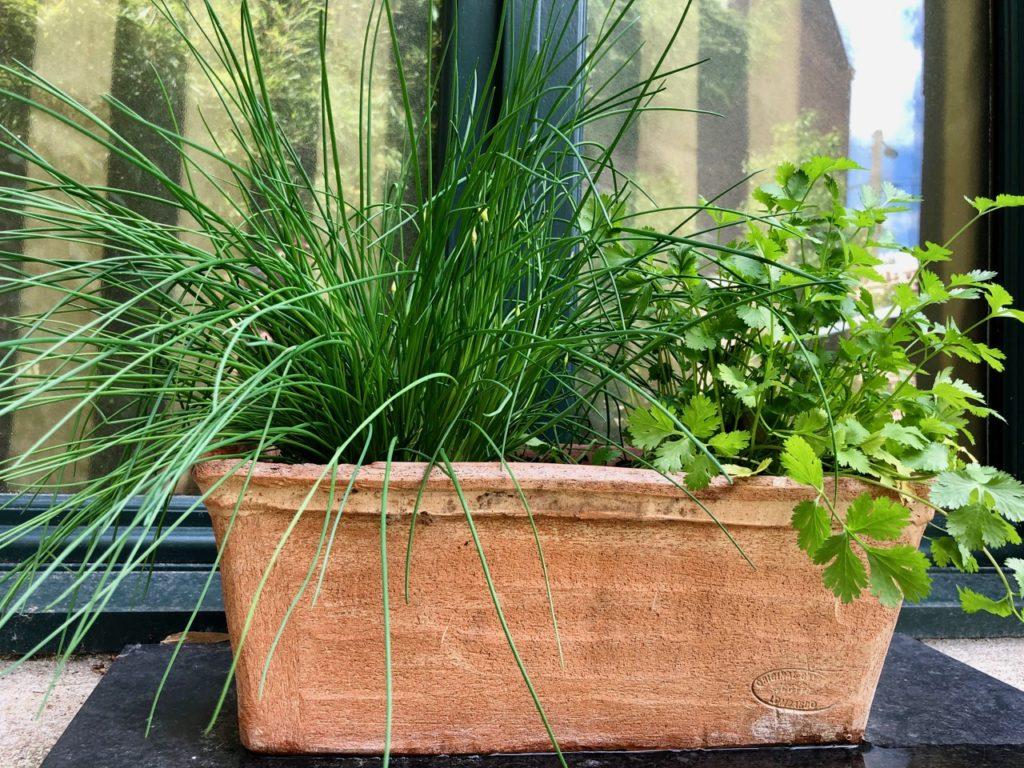 Mon jardin jardinière herbes aromatiques