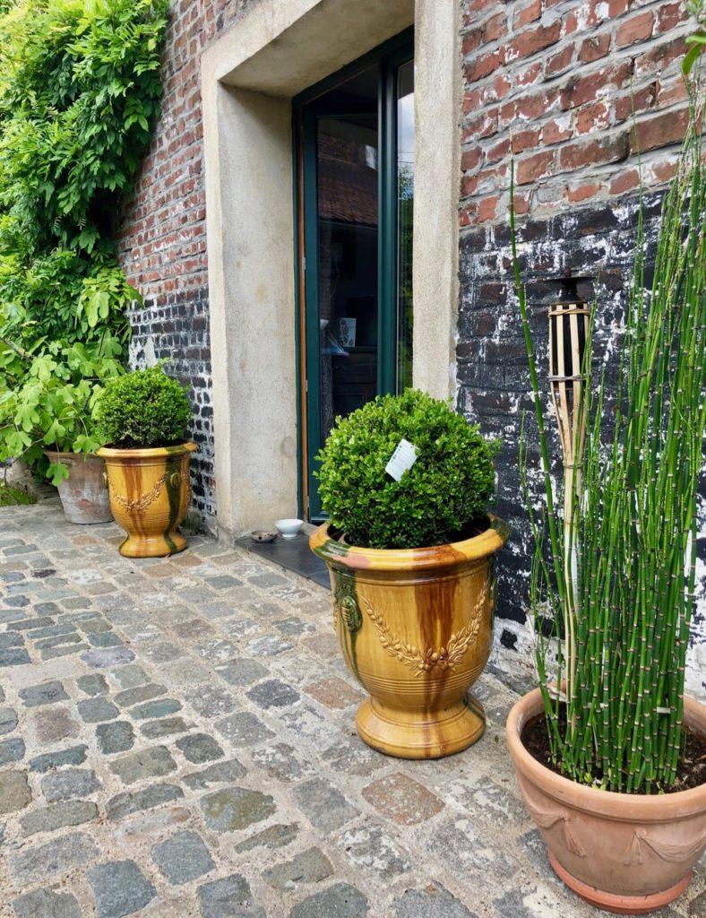 Mon jardin plantes en pot