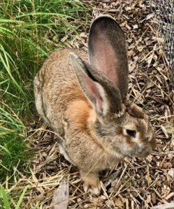 Parc-Mosaic-jardin-pierre-auvente-lapin
