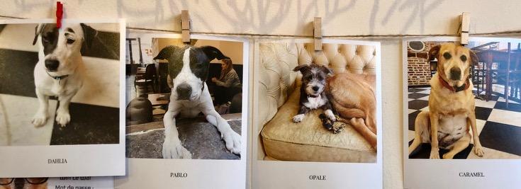 Lille-Le-Waf-photos-chiens