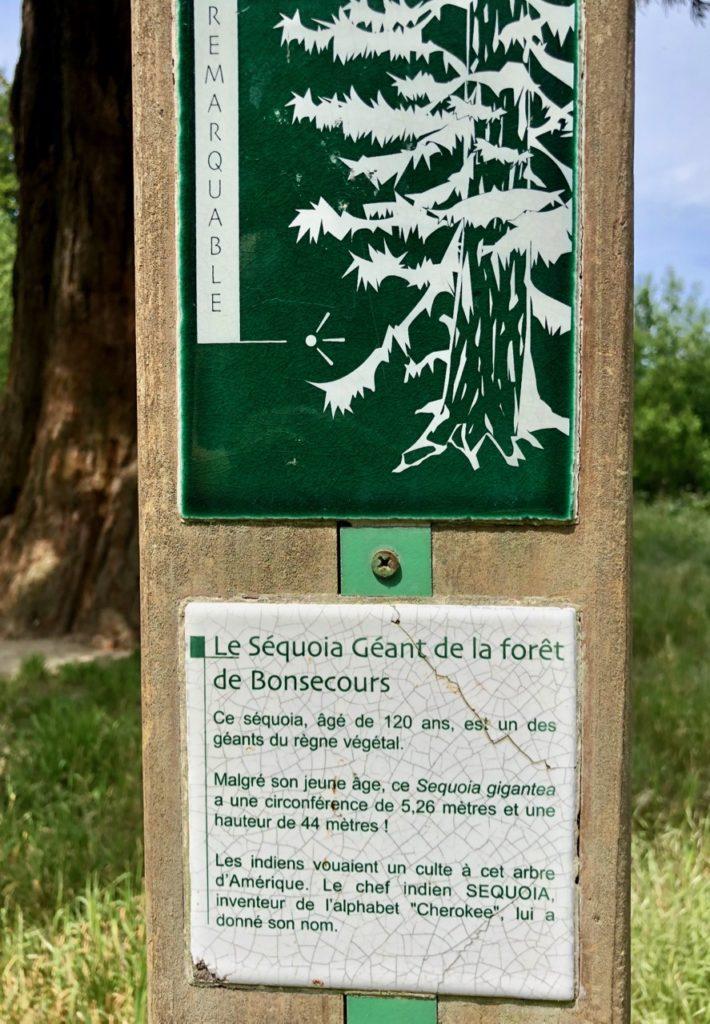 Conde-sur-l-Escaut-balade-grand-sequoia