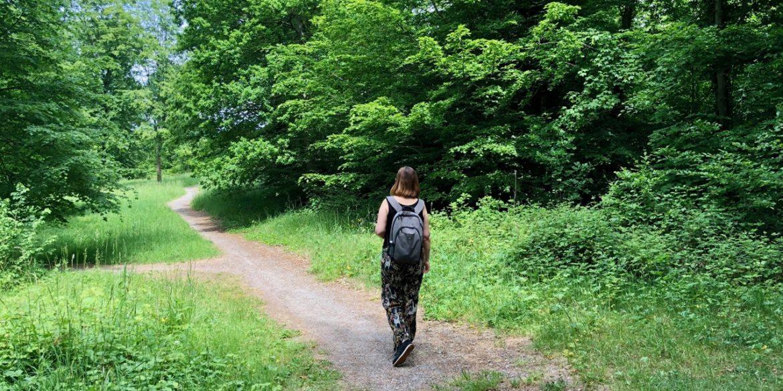 À Condé-sur-l'Escaut, ce que les arbres m'ont appris…