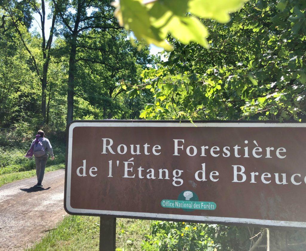 Liessies-route-forestiere-de-l-etang-de-Breucq