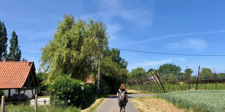 En Flandre, le sentier des Jacinthes par les points-nœuds