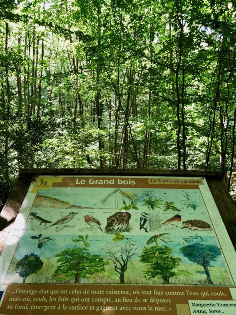 Saint-Jans-Cappel-sentier-des-Jacinthes-panneau-dans-sous-bois