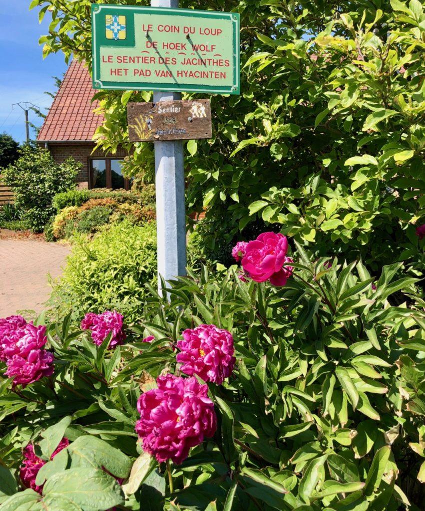 Saint-Jans-Cappel-sentier-des-Jacinthes-panneau-et-fleurs