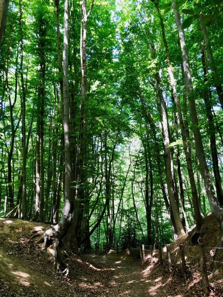 Saint-Jans-Cappel-sentier-des-Jacinthes-sous-bois