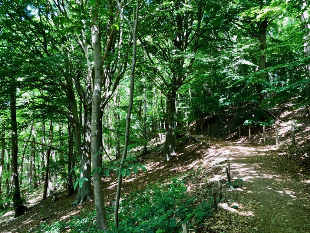 Saint-Jans-Cappel-sentier-des-Jacinthes-sous-bois-chemin