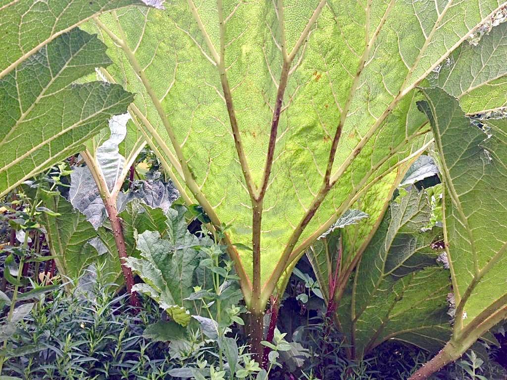 Cassel-Jardin-du-Monts-des-Recollets-a-travers-feuilles