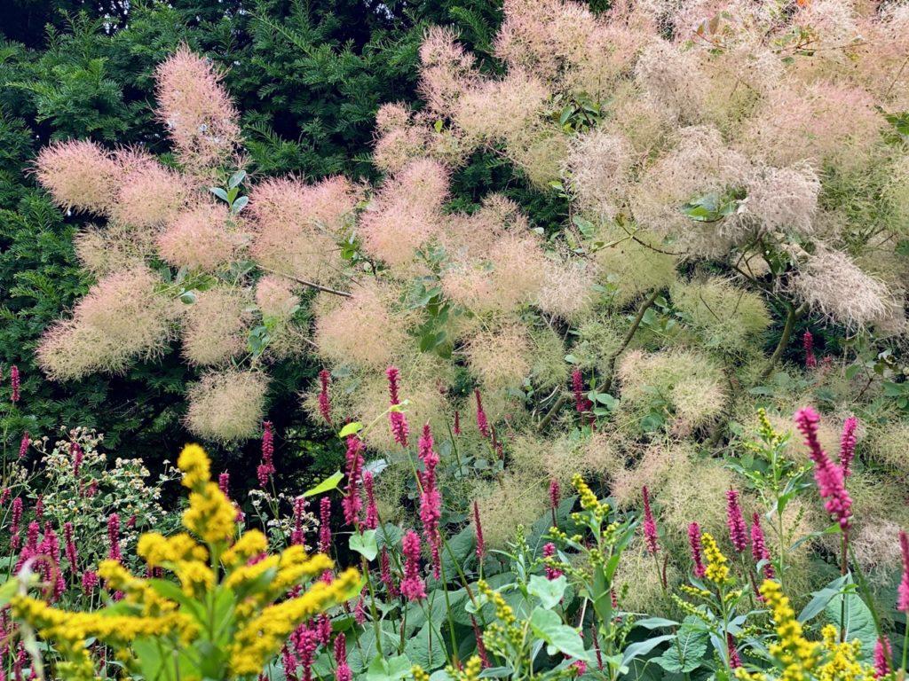 Cassel-Jardin-du-Monts-des-Recollets-fleur-floue