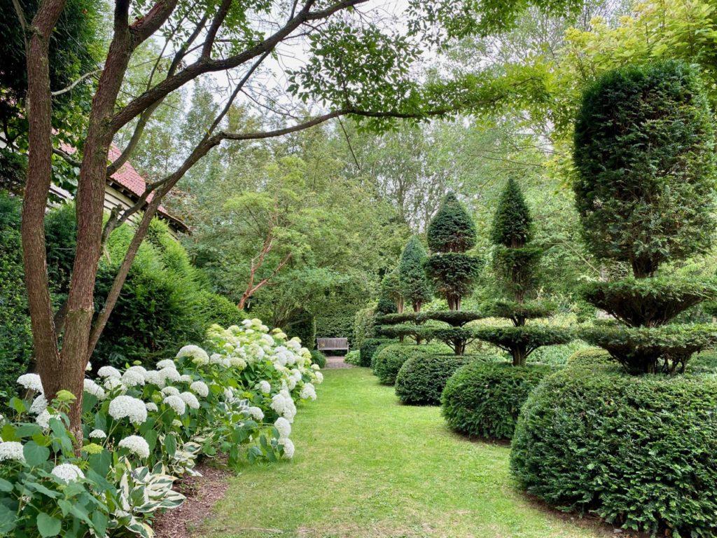 Cassel-Jardin-du-Monts-des-Recollets-hortensias-blancs-topiaires