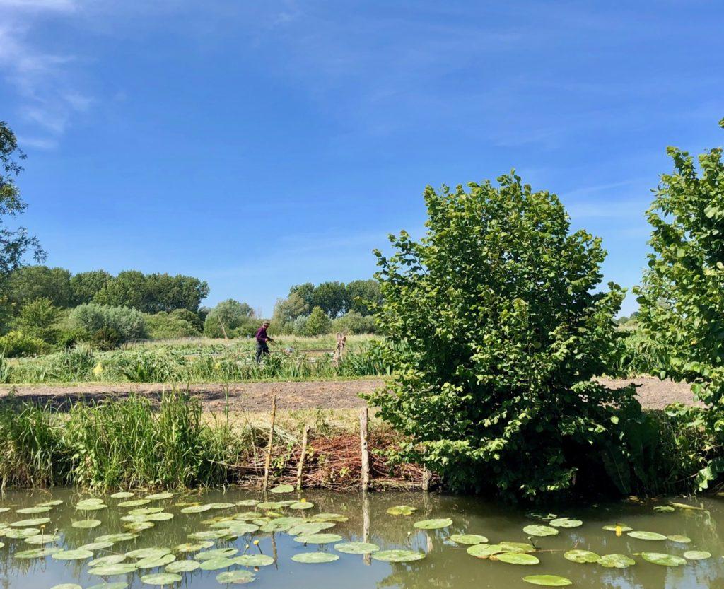 Marais-audomarois-Isnor-maraicher-dans-champ