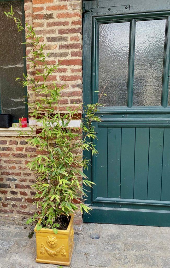 Jardin-avant-bambou-pot