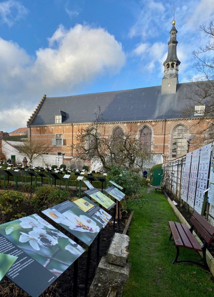 Hopital-Notre-Dame-a-la-Rose-Lessines-jardin-et-eglise