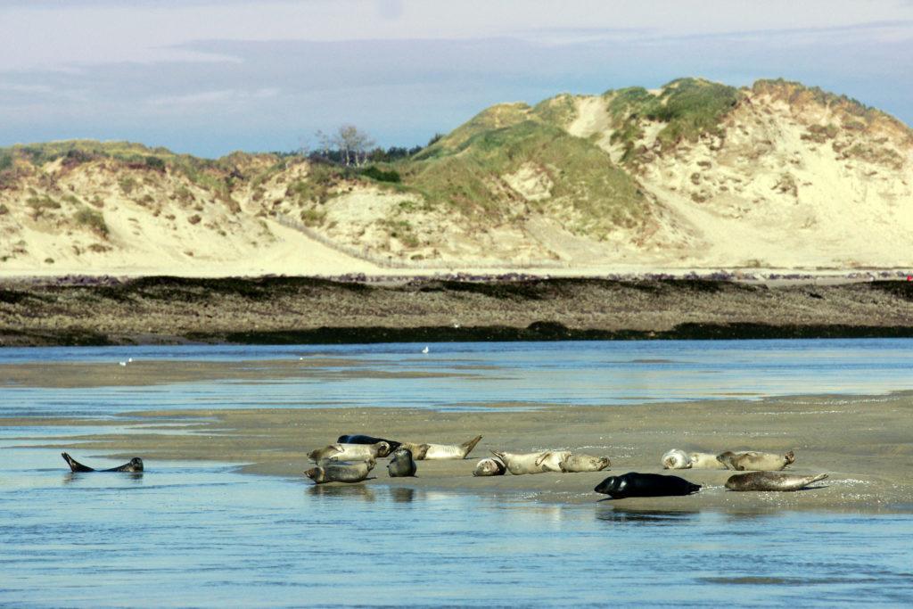Phoques baie Authie Francois Goudeau