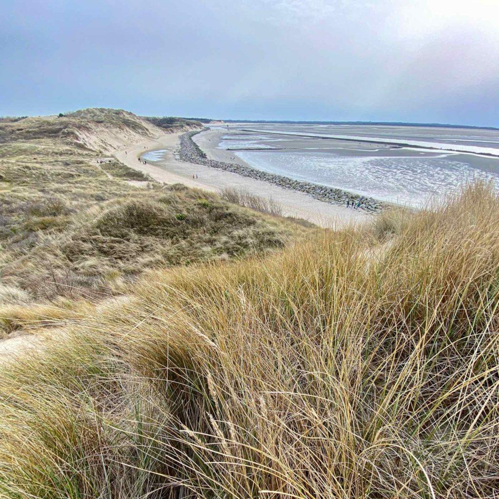 Sentier-dunaire-de-la-baie-d-Authie-dune-avec-oyats