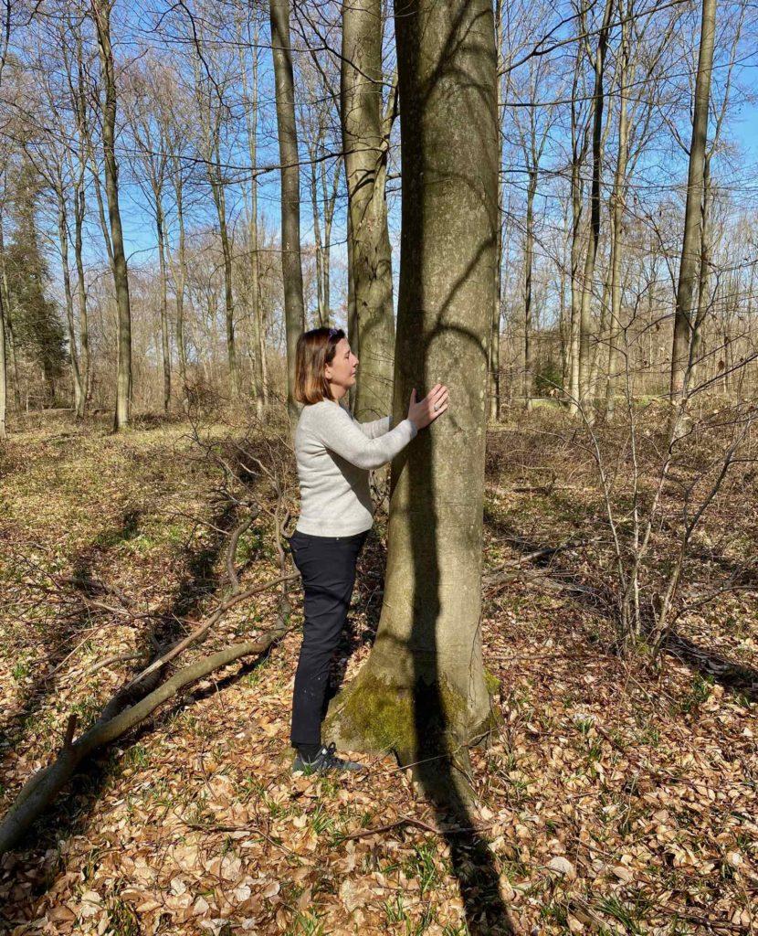Foret-Halatte-calin-avec-un-arbre