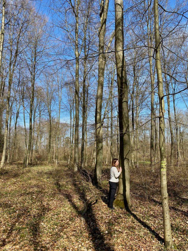 Foret-Halatte-calin-avec-un-arbre-trois