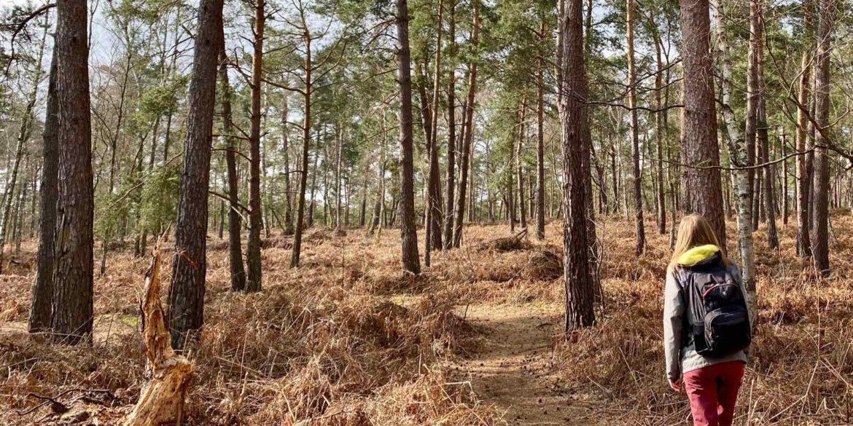 Dans l'Oise, quelle balade nature pour se faire du bien ?
