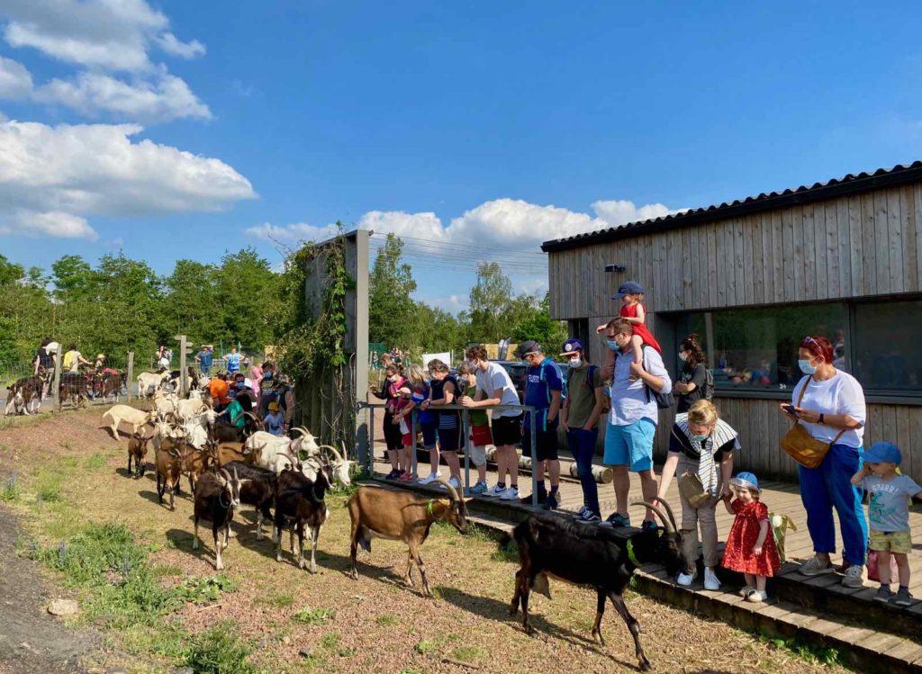 Coeur-d-Ostrevent-tourisme-rando-biquettes-arrivee-a-la-chevrerie