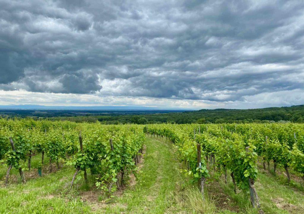 Alsace-vignes